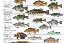 Types of Fish