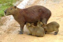 My Wonder Zoo : Rodent !