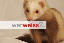 Tiere @ werweiss.de