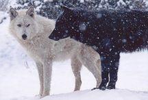 wolves. grrrr  / by Tia Colasante
