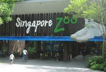 Singapore with Kids / Singapore is proving to be an up & coming destination with families, with many more making the trip. As it can be expensive, it's important to have some inside tips.