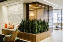 Office plants aragment