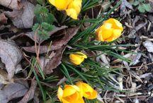 Day 25: Lenten photo-a-day [faithful]