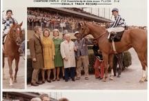 Berühmte Rennpferde / Legenden des Turf