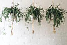 B O T A N I C A L / House plants