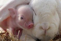 My happy animal farm