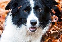 Honden / by inge park