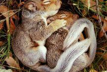 I nostri a-mici che sonnecchiano....