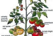 Garden health