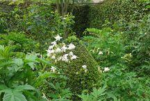 Mijn tuin / foto's van mijn tuin