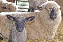 Sheep & Stuff