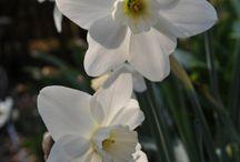 Flowers / by Caroline Farrell