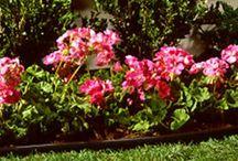Garden Structures / by My Organic Garden