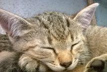 Kitty / Sleeping cat