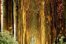 arboles,selva, bosques