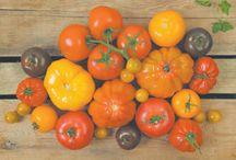 Potager Mont-Rouge / Le Potager Mont-Rouge offre l'autocueillette de fraises et de tomates de tous genres. La production de courges d'hiver, de fraise, de maïs sucré, de tomate, de cornichon, de concombre, d'aubergine et d'okra constituent leurs spécialités.