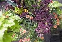 pot plants / by Linda Dixon Causey