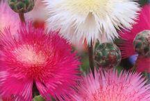 Bom dia!!!!Pessoas Lindas,estas flores são para vocês.