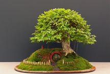Miniature garden and bonsai trees / Miniature garden with bonsai trees