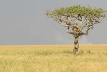 Africa / Capturing all of Africa's beauty.
