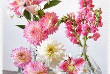 outdoor flowers in