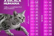 edad de los gatos