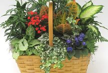 Plants for the Home / Easy care houseplants that are perfect for the home or office!  Hallsflowershop.com. Atlanta plant experts since 1946!