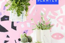 Cacti a new bloggers favorite plant