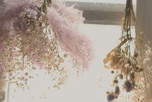 *dry flower*