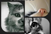 Állatságok