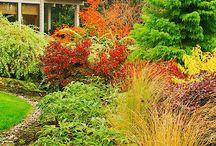 gardening / by Donna Epley