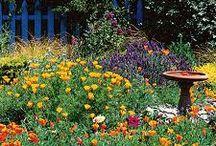 Backyard & Deck Ideas / by Suzanne Curran