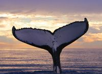 Whales / by Deb Merrill