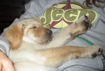 Lindsay Loves Dogs / Lindsay Loves Dogs