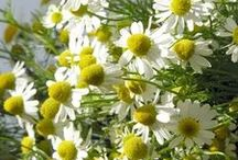 [folhas & flores] / by Margarida Tavares