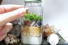 Mini jar Terrariums / Beautiful terrariums