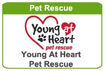 PET RESCUE / MISSION: To rescue and rehome senior dogs and cats, to educate the public on the benefits of adopting older pets and their care, to reduce the euthanasia rate for senior pets in the state of Illinois. / by DonorShare of Palatine
