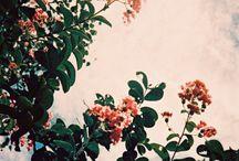 Nature! / by Linda Attiea