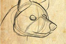 Design & animals