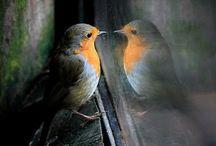 Birds no 1 **