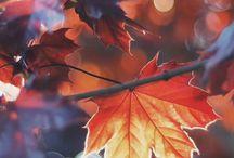 autumn/podzim