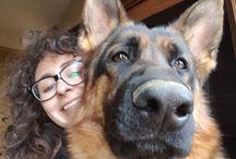 my dogs ❤