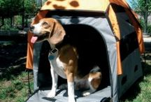 Dog Tents for Camping