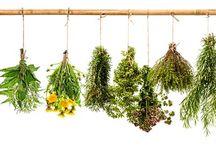Kräuter, Pflanzen & Smoothie / Kräuter, Pflanzen & Smoothie