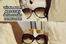 Véi... Na boa (only cats)