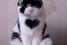 Black and Whites ♥ / beautiful black and white animals