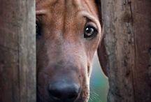 """D o g g y     D o g g y / Als Hundeliebhaber habe ich natürlich auch eine Pinnwand für sie. Ich hoffe, dass sie sich alle vertragen. Das """"arme Pferd"""" hat sich nicht verlaufen... Es ist nur neugierig..."""