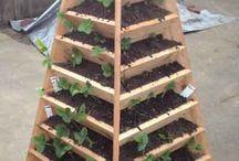 vertikální zahrada