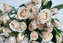 Spray Roses / A selection of the stunning spray roses found at New Covent Garden Flower Market