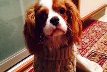 Můj Pejsek Charlie / Můj Pejsek Charlie A Jeho Nový Šedý Pletený Svetřík Svetříček/My Dog Charlie And His New Grey Sweatshirt